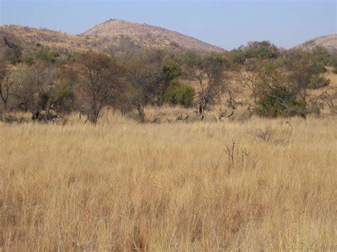 habitat chaises chaise pliante africa habitat palzon com