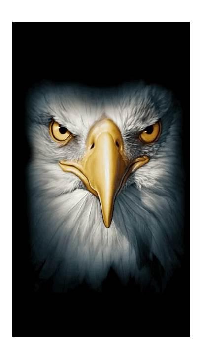 Eagle Eagles Gifs Hawk Bald Face Eyes