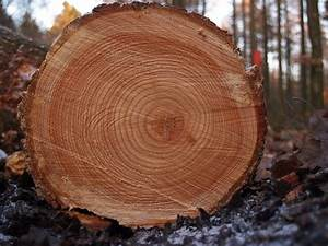 Tree Rings Reveal Our Past  U2014 And Our Future