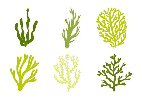 We have a huge range of svgs products available. Sea Weed Vector Icon - Download Free Vectors, Clipart ...