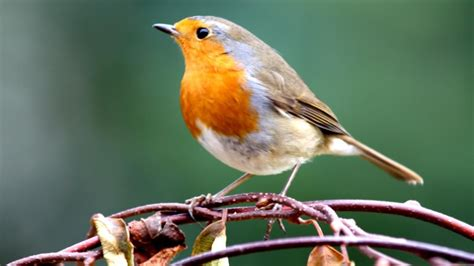 where can you find a bird identification chart online