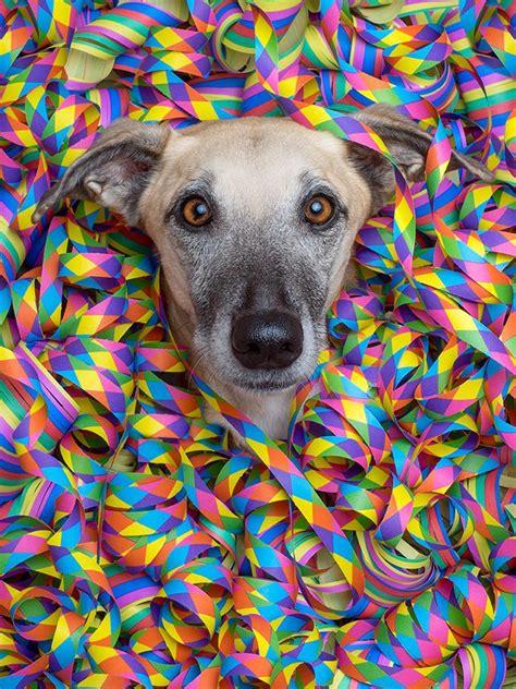 happy birthday dog birthday pinterest hunde witzig
