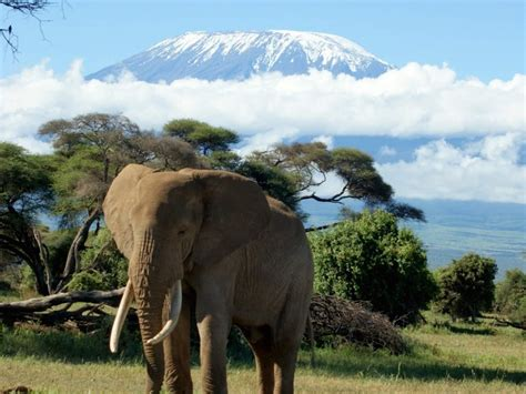 Mount Kilimanjaro Safari Wallpaper - Free HD Downloads
