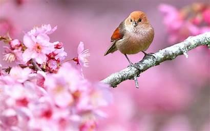 Bird Birds Pink Wallpapers Backgrounds Wallpaperaccess Kargo
