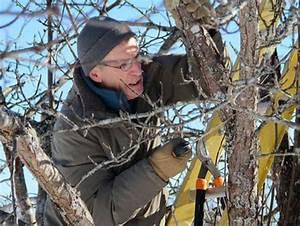 Quand Planter Un Pommier : 17 best ideas about les arbres fruitiers on pinterest ~ Dallasstarsshop.com Idées de Décoration