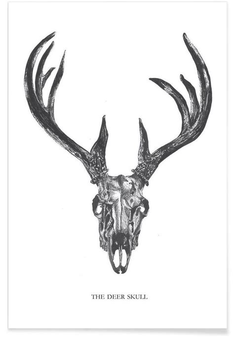 Best Images About Whitetail Deer Pinterest