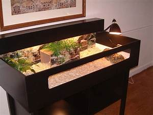 tortoise table … | Pinteres…