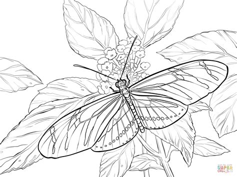 zebra longwing coloring page  printable coloring pages