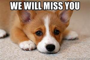 We Will Miss You : we will miss you sad corgi meme generator ~ Orissabook.com Haus und Dekorationen
