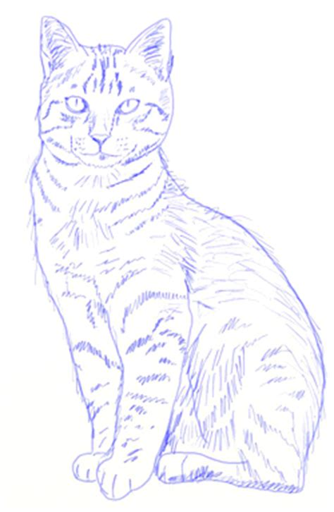 draw  realistic cat draw step  step