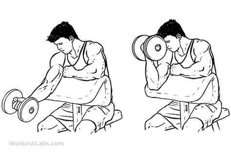 Standing Preacher Curl Bench by One Arm Dumbbell Preacher Curl Illustrated Exercise