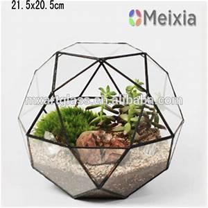 Acheter Terrarium Plante : dessin de mouche ~ Teatrodelosmanantiales.com Idées de Décoration