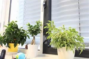 Gitterwand Für Pflanzen : ungiftige zimmerpflanzen f r katzen 15 gr ne bl hende pflanzen ~ Markanthonyermac.com Haus und Dekorationen
