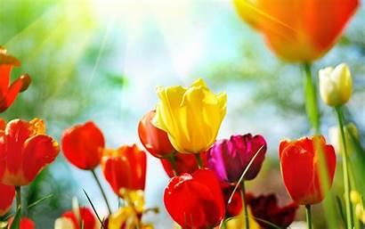 Spring Desktop Flowers Wallpapers Cave Wallpapertag
