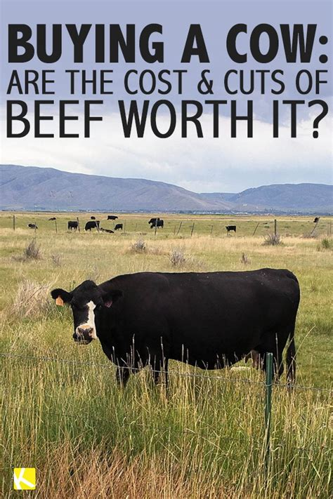 How Much Is A Cowhide Worth - buying a cow are the cost and cuts of beef worth it