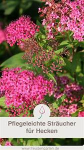Sträucher Für Garten : die 12 sch nsten str ucher f r eine pflegeleichte hecke im garten garten pinterest garten ~ Buech-reservation.com Haus und Dekorationen