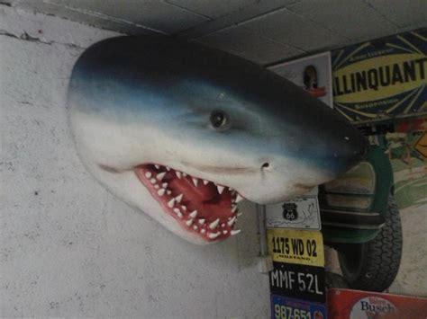 troc echange tête de requin en resine sur troc com