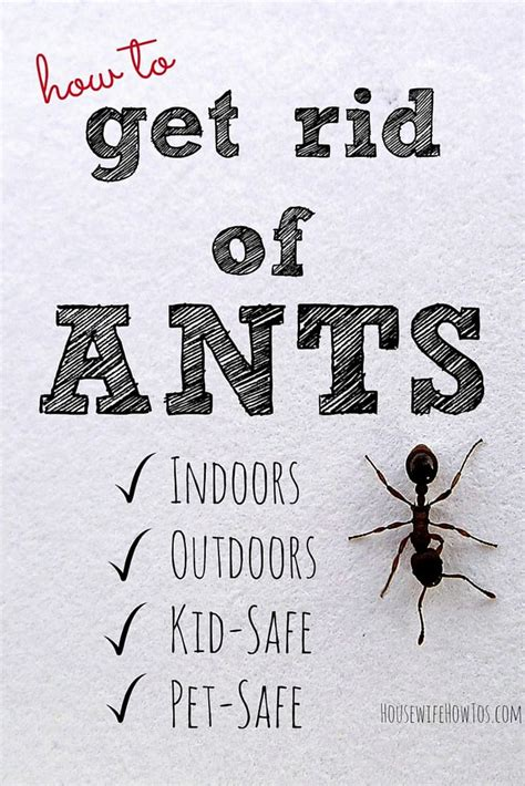 how to get rid of ants in the house how to get rid of ants and keep them away for