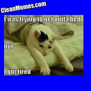 tired dog meme - 28 images - tired meme www pixshark com ...