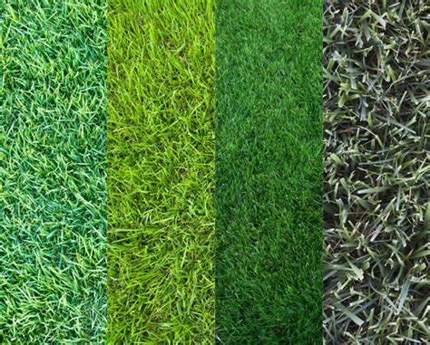 Proper Care For Your Grass Type
