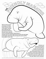 Coloring Manatee Manatees Azcoloring Graphic Activity Popular sketch template