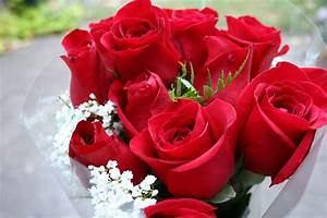 Beautiful bouquet of red roses on March 8 wallpapers and ...