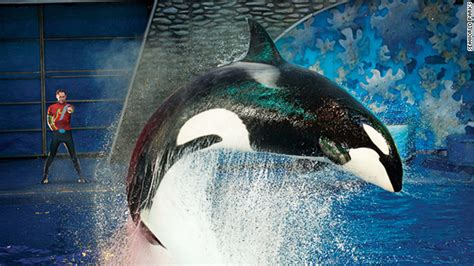 Seaworld Responds To Questions About Captive Orcas