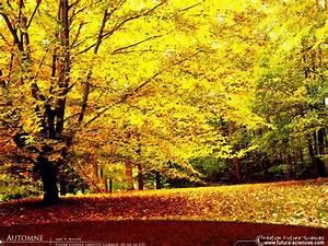 fond d39ecran automne flamboyant With forum plan de maison 13 fond decran feuilles dautomne
