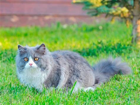 gatto da appartamento razza cani e gatti le razze pi 249 adatte ai bambini lifegate