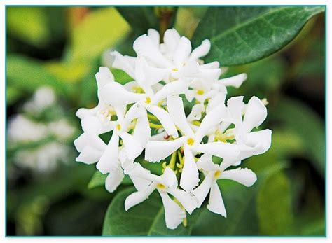 Winter Flowering Climbing Plants