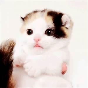cat cute adorable cats kitten cute gifs cat gifs kitten ...