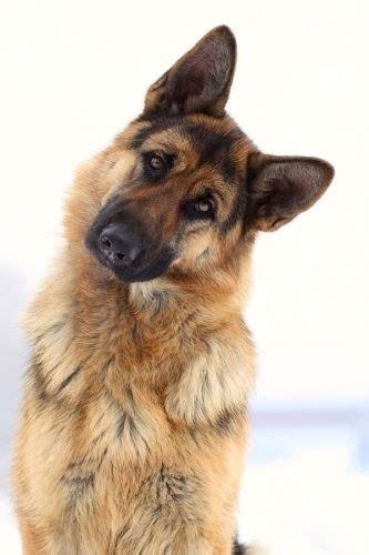 imagenes de perros ilustraciones fotos  dibujos tiernos