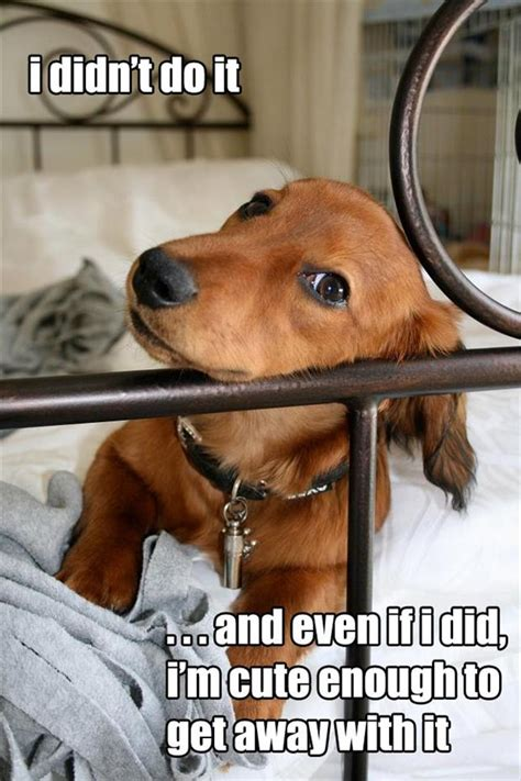 Cute Dogs with Quotes