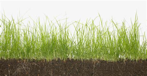 Core Aeration, Dethatching, Overseeding, And Fertilization