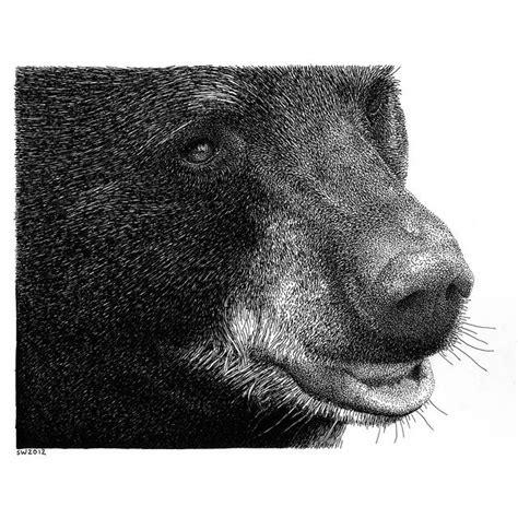 black bear   ink drawing  drawings pinterest