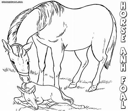 Horse Coloring Horses Printable Fun2draw Books Mother