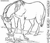 Horse Coloring Baby Pages Print Animal sketch template