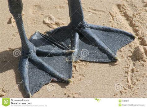 webbed feet stock photo image