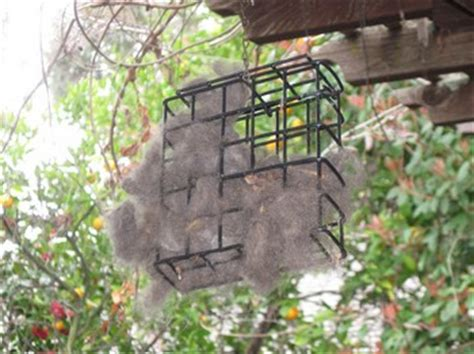 picture  previous year  basic wire cage suet feeder
