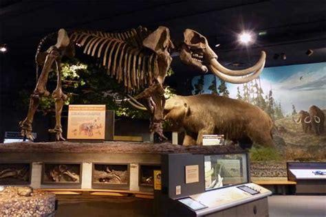 rochester museum  science center rocparentcom