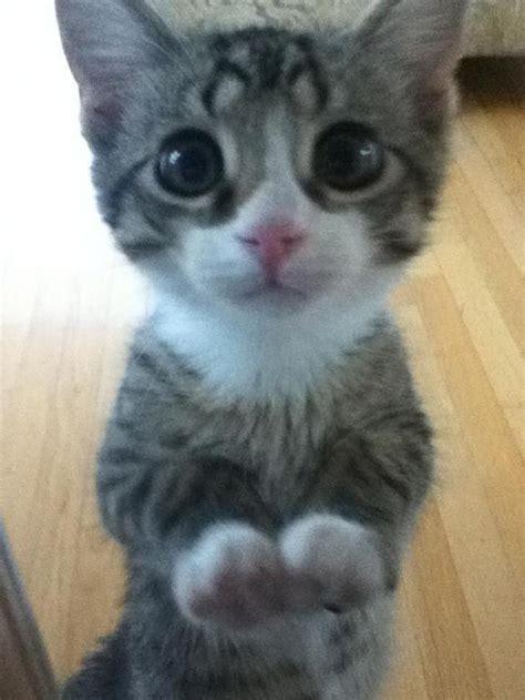 Cutest Cat Ever  Pet Pure™