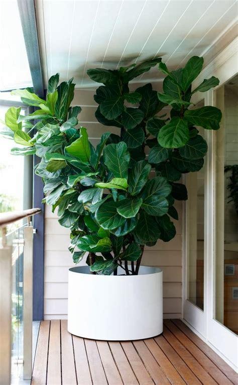 diy hanging outdoor bed and vjs fiddle leaf fig tree