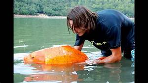 Most Famous Giant Goldfish In The World