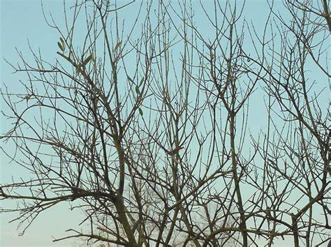 bureau de change near me olivier en pot perd ses feuilles 28 images olivier en