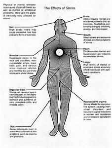 Top 5 Ways Kombucha Relieves Stress