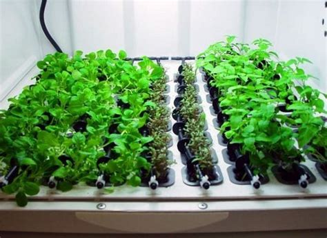 10 images about mini hydroponics on gardens