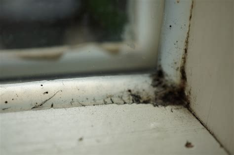 Schimmel Am Fensterrahmen Entfernen