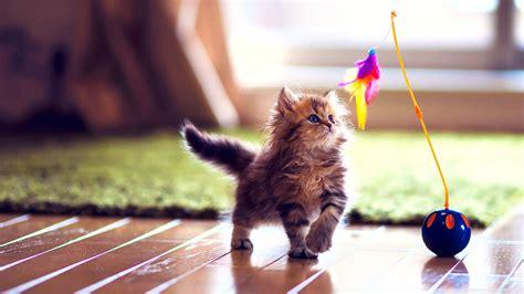 Cute Kitten Wallpapershd