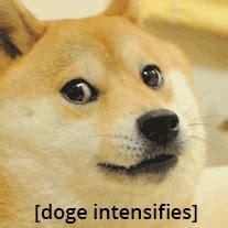 Doge Meme Tumblr - doge meme tumblr
