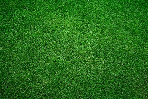 Royalty Free Grass Pictures, Images And Stock Photos